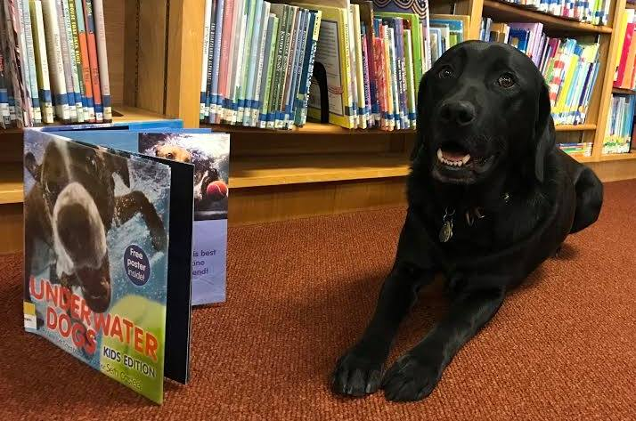 ibrary read to a dog