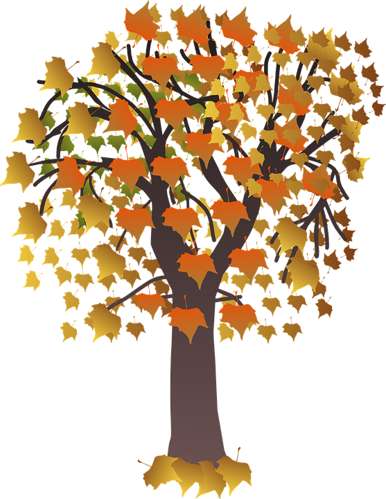 Tree with Fall Colored Leaves