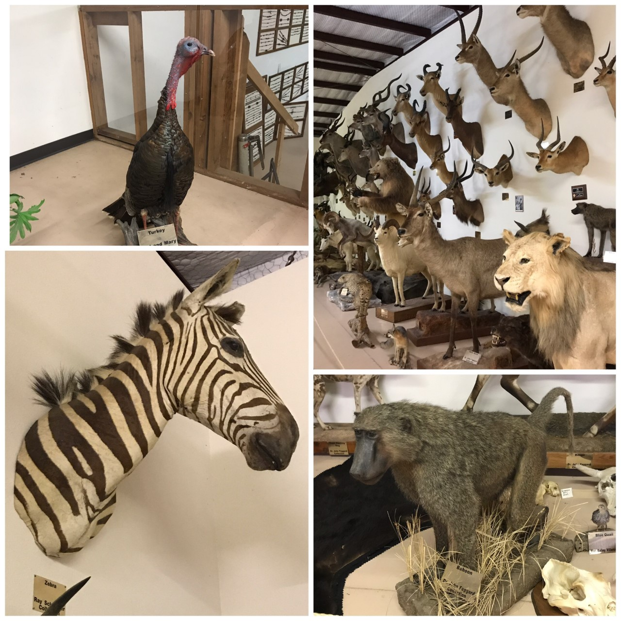Animal Exhibit