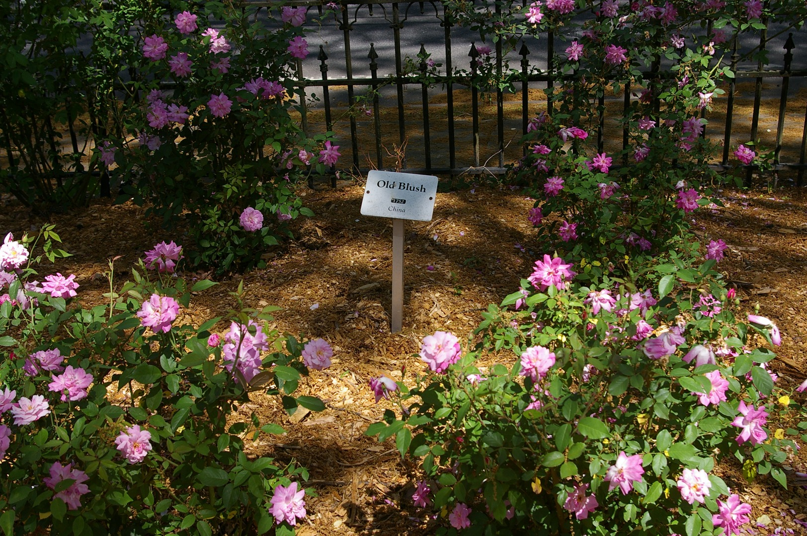 Rose Lawn has been honored as a Historic Garden of Georgia featuring ...