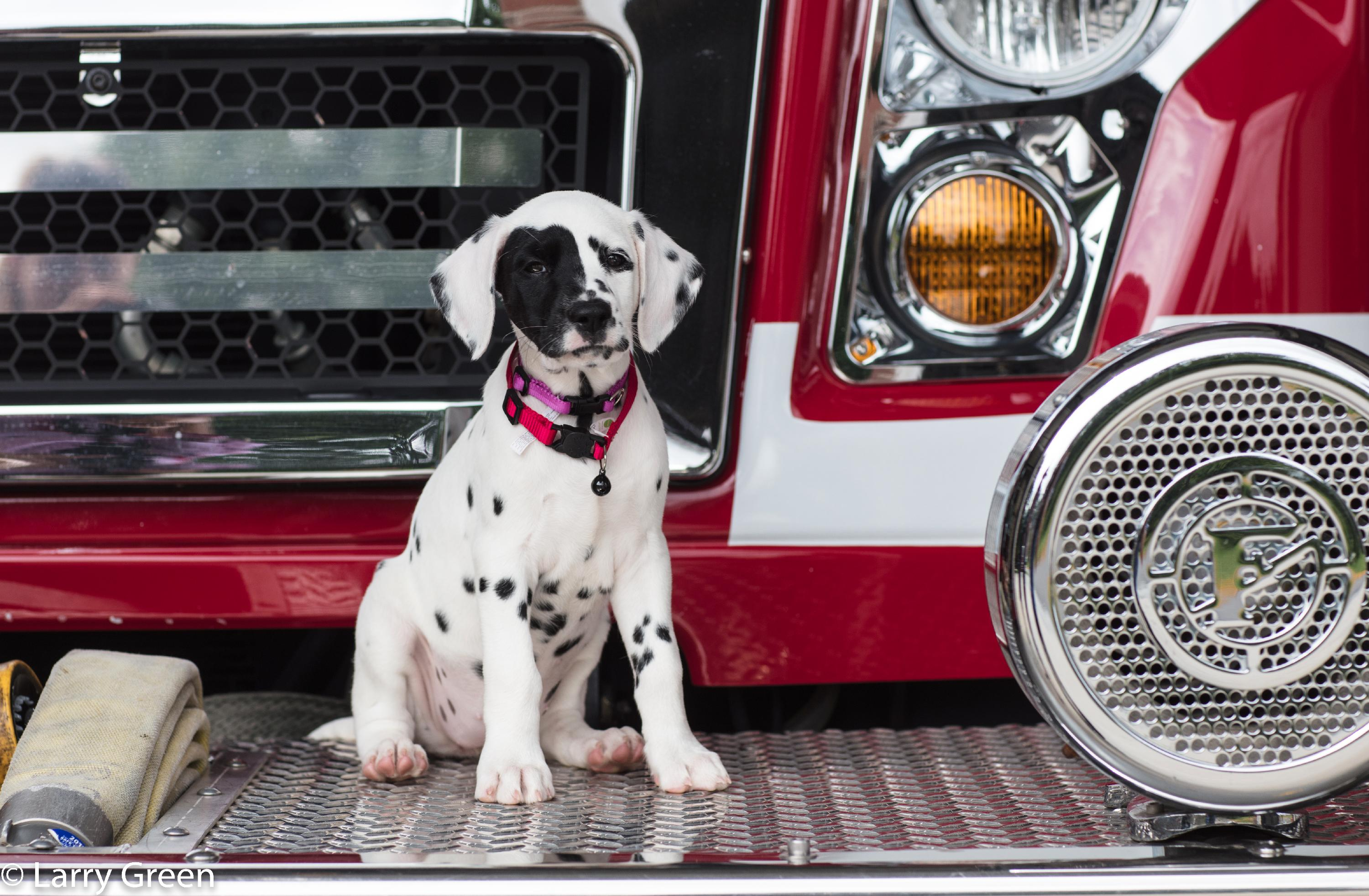 Oreo the Fire Dog