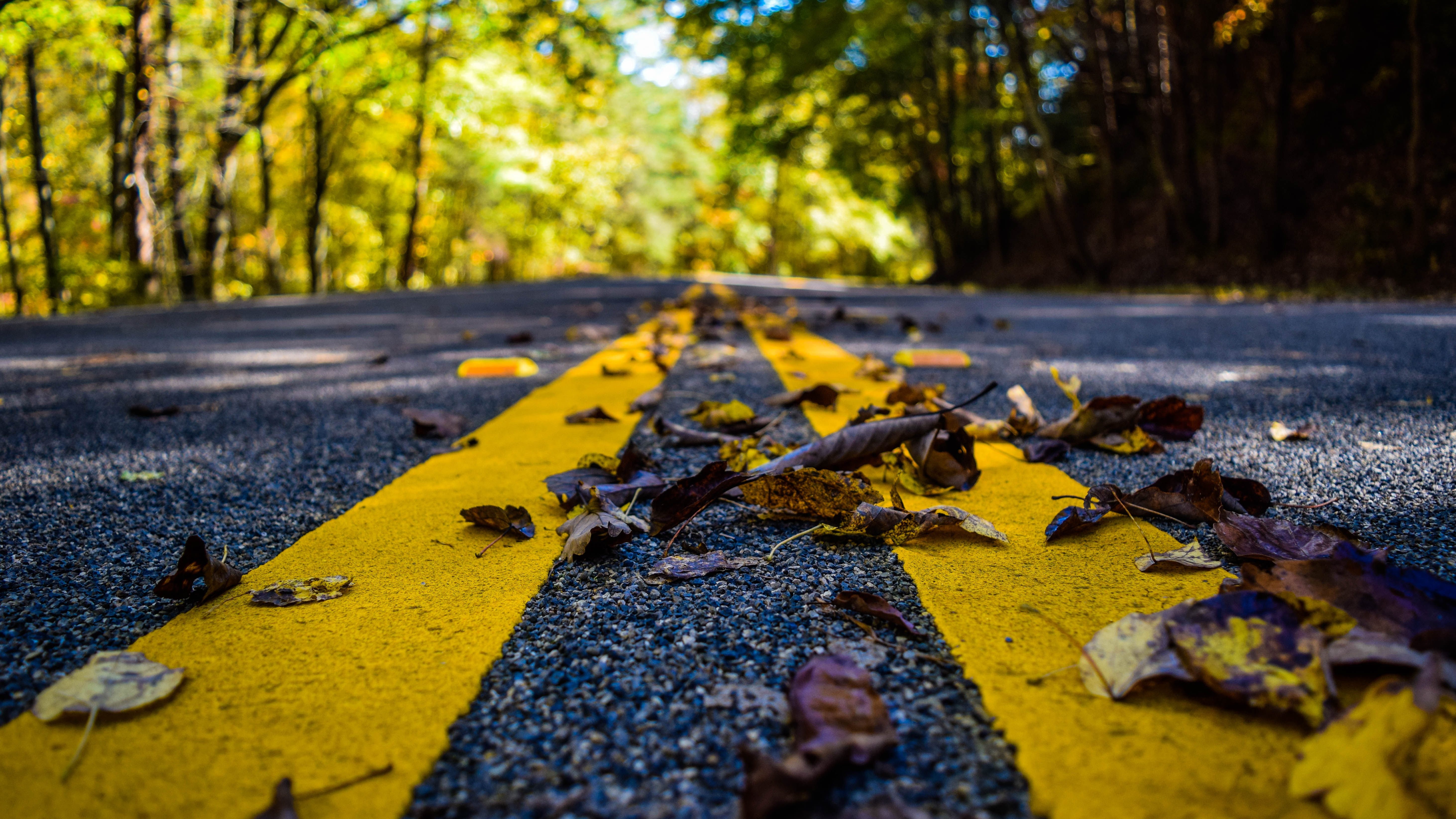 picture of road with leaves