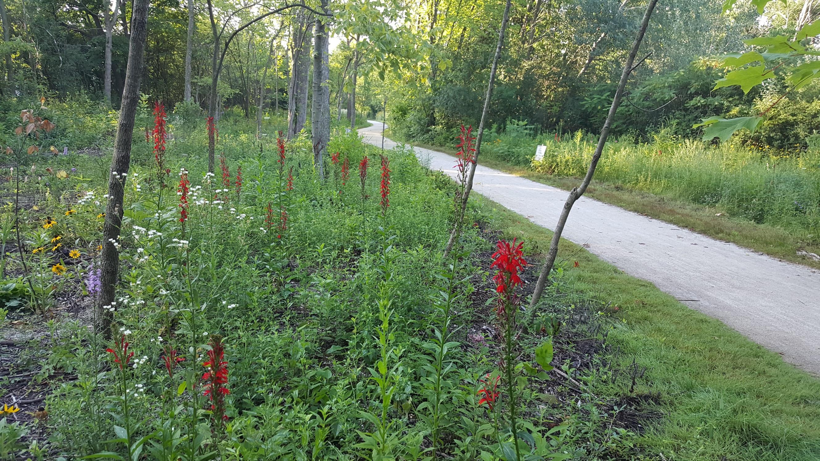 Polliantor Garden