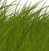 vegetation_grass_card_preview - Copy
