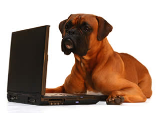 istockphoto_1690968_dog_working_on_laptop