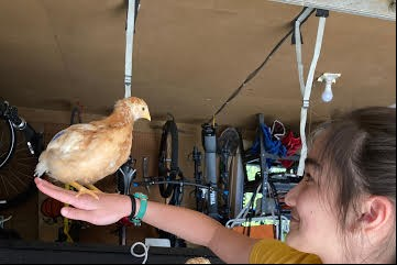 Girl and Chicken 2