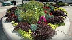 Pic-Community-DowntownPlantings
