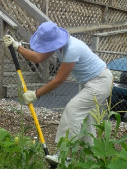 Pic-Beautification-CommunityGardenVolunteer